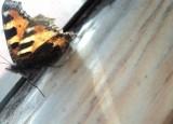 Motýl | Petr Mann