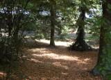 Natáčení v botanické zahradě | Tábor