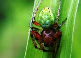 Oceněné fotografie z mediální výuky na OAEL | Maťátková - Pavouk