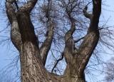 M. Klicperová - Síla stromů | Výběr fotografií - putovní výstava Kouzlo okamžiku
