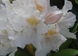 Marcela Klicperová, Kolekce květů
