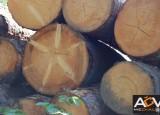 Z výuky - Rozbor fotografií z výletu na Šumavu a příprava animovaného snímku Černý mos